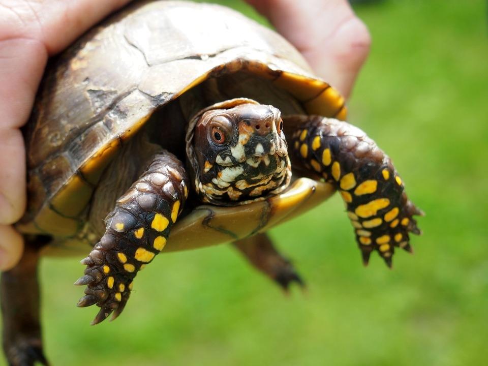Pet Sitter For Your Pet Tortoise